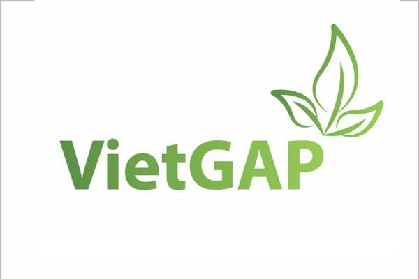 Tiêu chuẩn VIETGAP là gì?